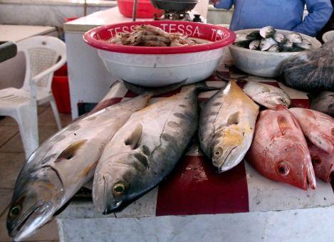 Is vis noodzakelijk?